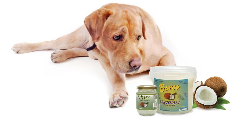 Kutya és kókuszolaj
